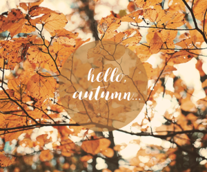 autumn, beauty, and colors image