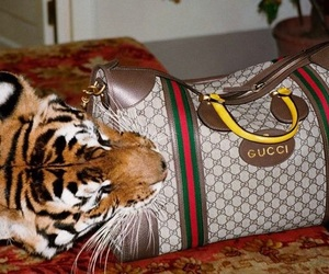 gucci, tiger, and fashion image