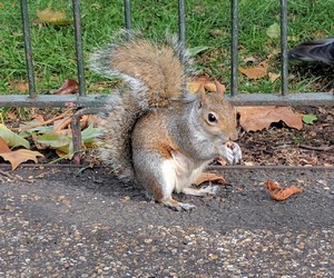 london, nature, and squirrel image