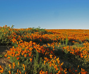 flowers, land, and nature image