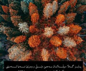 autumn, kurd, and kurdi image