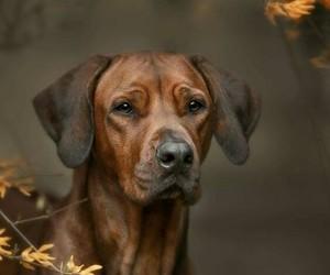 Animales, perro, and mascota image