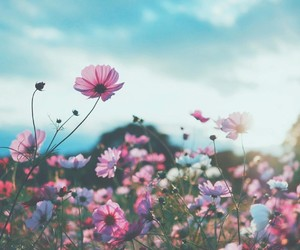beautiful, colorful, and floral image