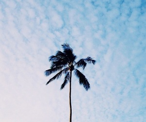 sky, palm trees, and beach image