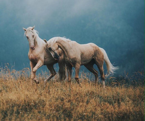 horse, animal, and art image