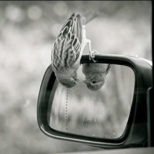 bird, mirror, and black and white image