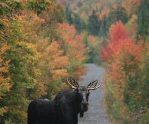 autumn, moose, and Maine image