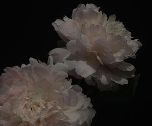aesthetic, flowers, and dark image