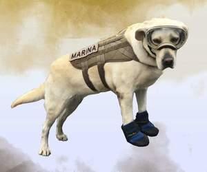 dog, Frida, and perro image