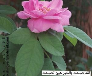 استغفر الله, صباح الخير, and صباح الورد image