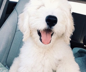 happy, puppy, and car ride image