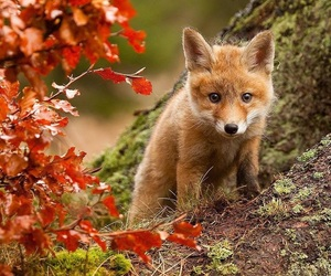 animal, hello october, and autumn image