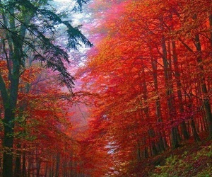 autumn, red, and forest image