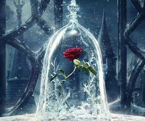 disney, rose, and beauty and the beast image