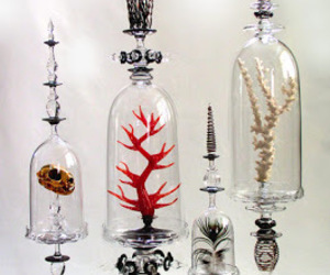 coral, glass, and shell image