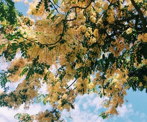 beautiful, yellow, and flowers image