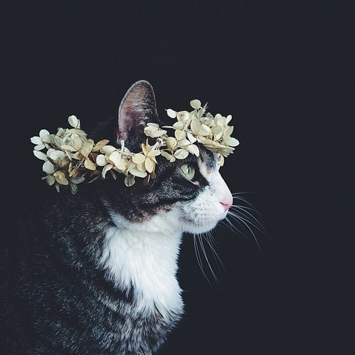 cat, pretty, and funny image