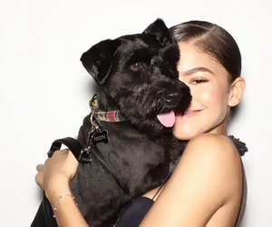 zendaya, dog, and animal image