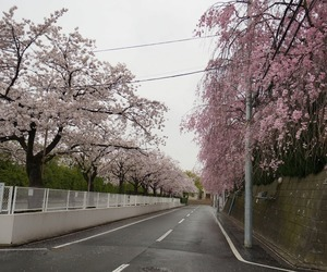 japan, street, and city image