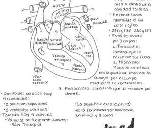 anatomia, dreams, and Estudio image