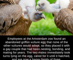happy family, vultures, and mated image