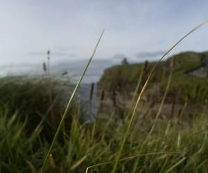 Dream, green, and ireland image