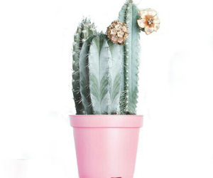 overlay, pink, and cactus image