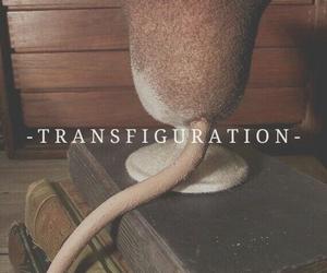 harry potter, hogwarts, and transfiguration image