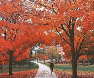 trees, yes, and autumn image