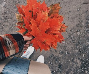 autumm, clothes, and fall image
