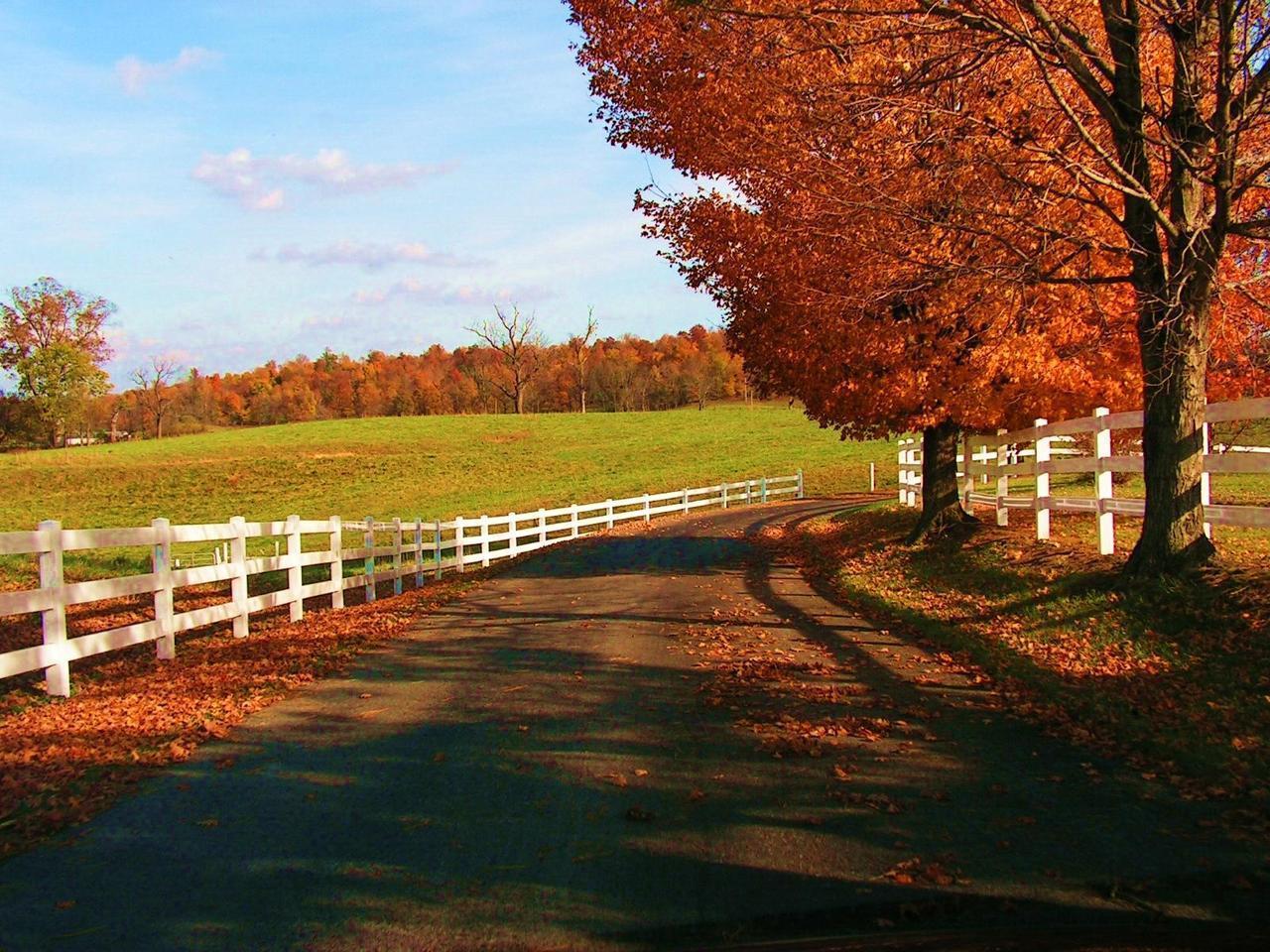 fall and autumn image