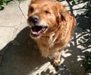 dog, Lola, and wink image