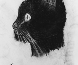 black and white, cat, and charcoal image