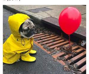 it, dog, and pug image