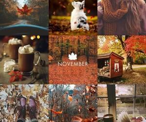 autumn, november, and fall image