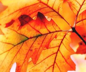 automne, autumn, and season image
