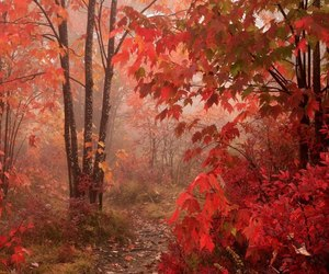 autumn, forest, and red image