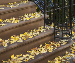 fall, fall colors, and home image