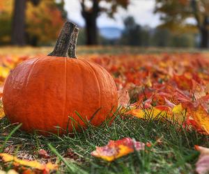 autumn, pumpkin, and beautiful image