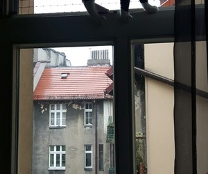 black cat, buildings, and cat image