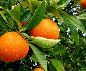 fruit, orange, and rain image