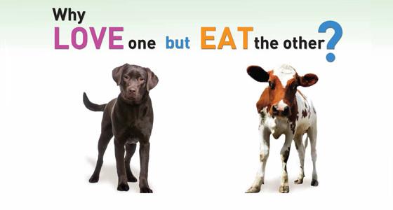 animals, veganism, and article image