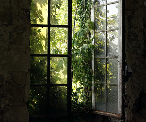 green and window image