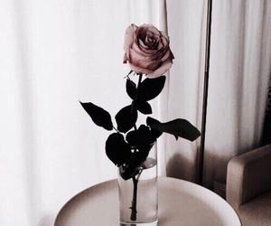 beautiful, pastel, and rose image
