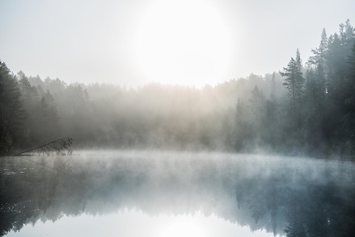 fog and memories image