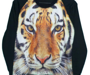 big cat, sweatshirt, and bengal tiger image
