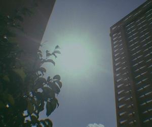 sun, sunlight, and tree image