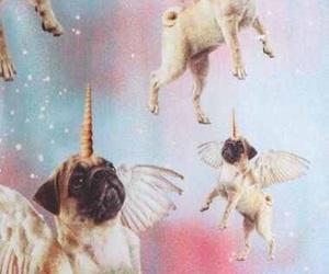 unicorn, pug, and wallpaper image