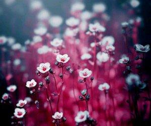 amor, bonito, and hermoso image