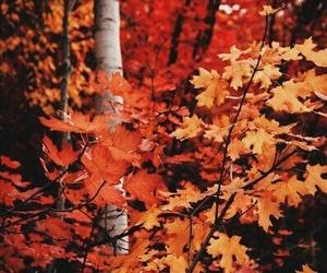 autumn, orange, and leaves image